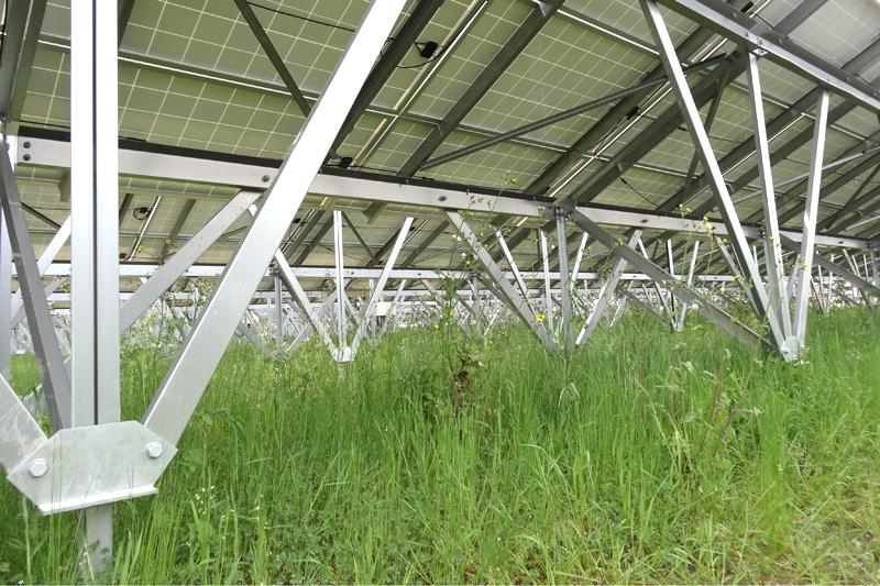 太陽光発電施設内の雑草繁殖のようす